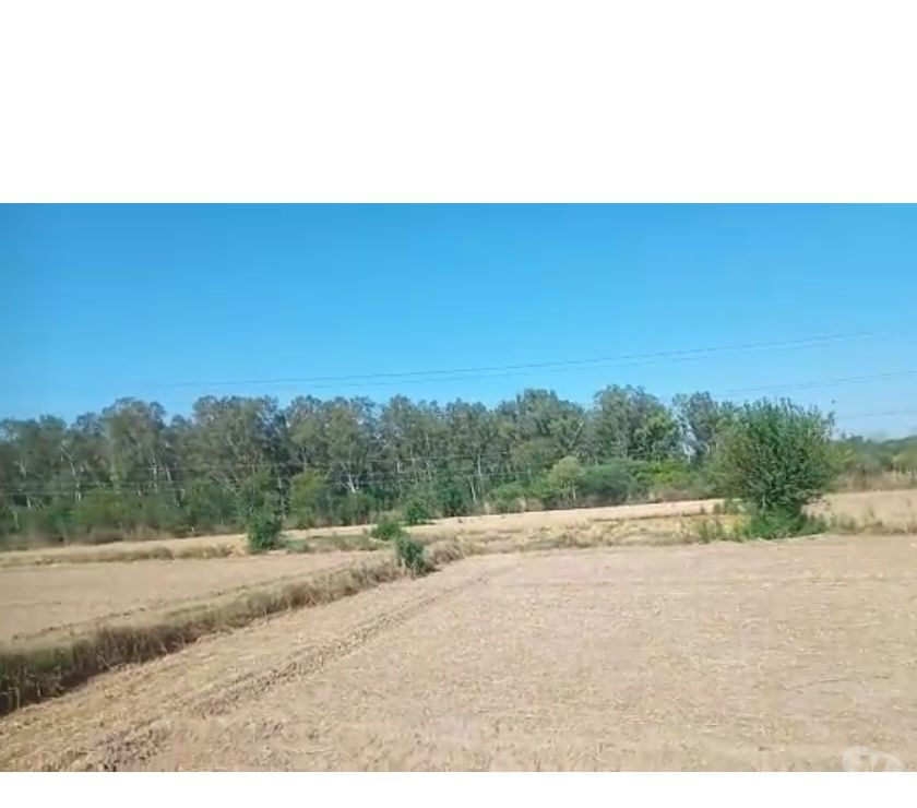 Land sale Karnal - Photos for I want to sell agriculture land