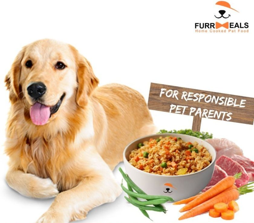 Pet shops New Delhi - Photos for How long to feed puppy food | Furrmeals