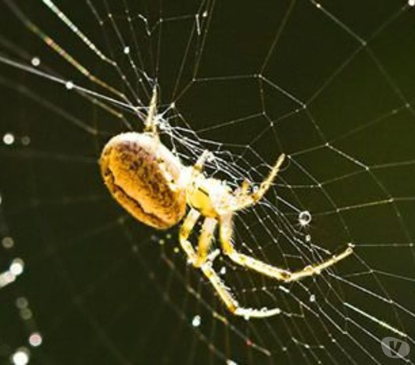 Other Services Chennai - Photos for Spider Control Services In Chennai, Spider Control Services