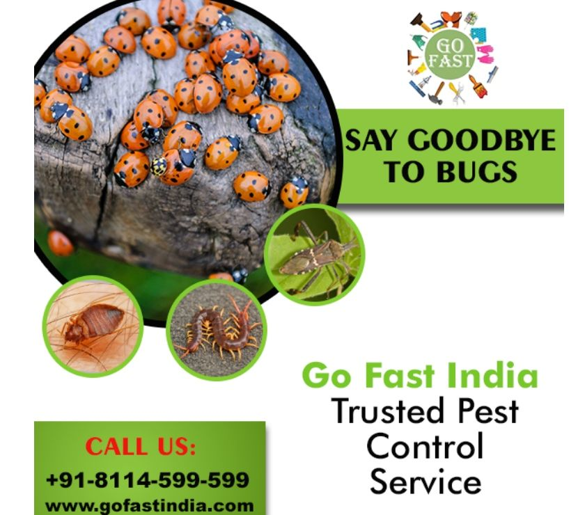 Other Services Agra - Photos for Go Fast India- Pest Control Service In India