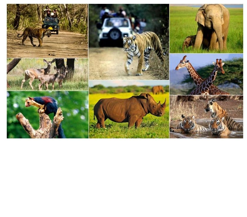 Other Services Delhi - Photos for Wildlife tour packages