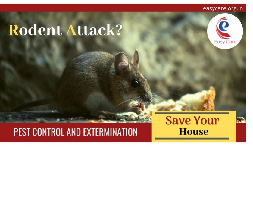 Other Services Delhi - Photos for Pest Control Management for Rodent in India