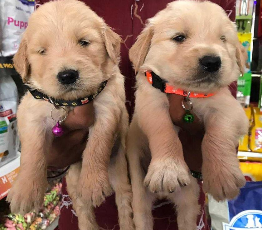 Buy & Sell Pets Mumbai - Photos for All types pets for available