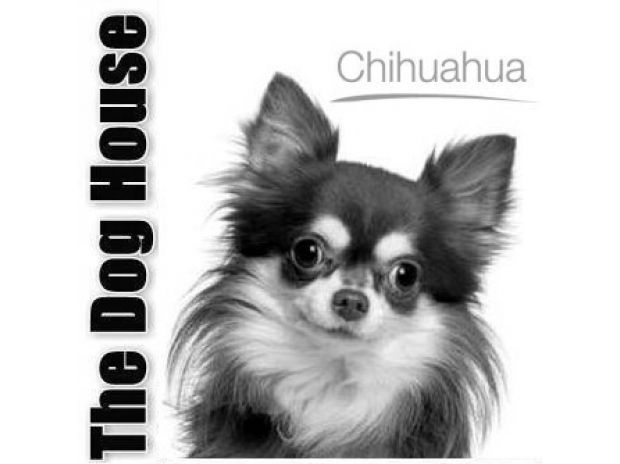 Photos for CHIHUAHUA PUPPIES FOR SALE - THE DOG HOUSE