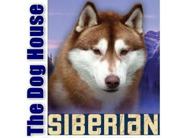 Photos for SIBERIAN HUSKY PUPPIES FOR SALE - THE DOG HOUSE