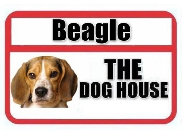 Buy & Sell Pets New Delhi - Photos for BEAGLE PUPPIES FOR SALE - THE DOG HOUSE
