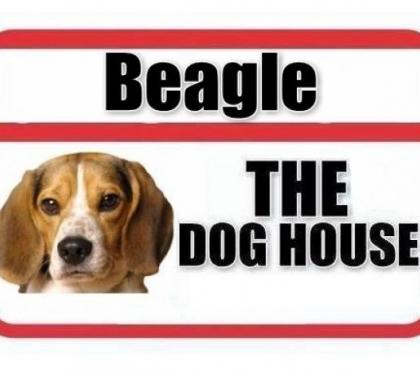 Photos for BEAGLE PUPPIES FOR SALE - THE DOG HOUSE