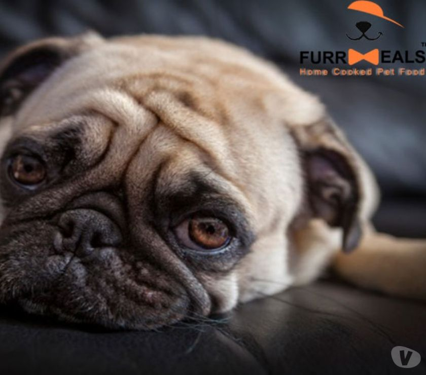 Food & Drink Suppliers New Delhi - Photos for Can Dogs Eat Oats?   Benefits of Oats in Your Dog's Diet