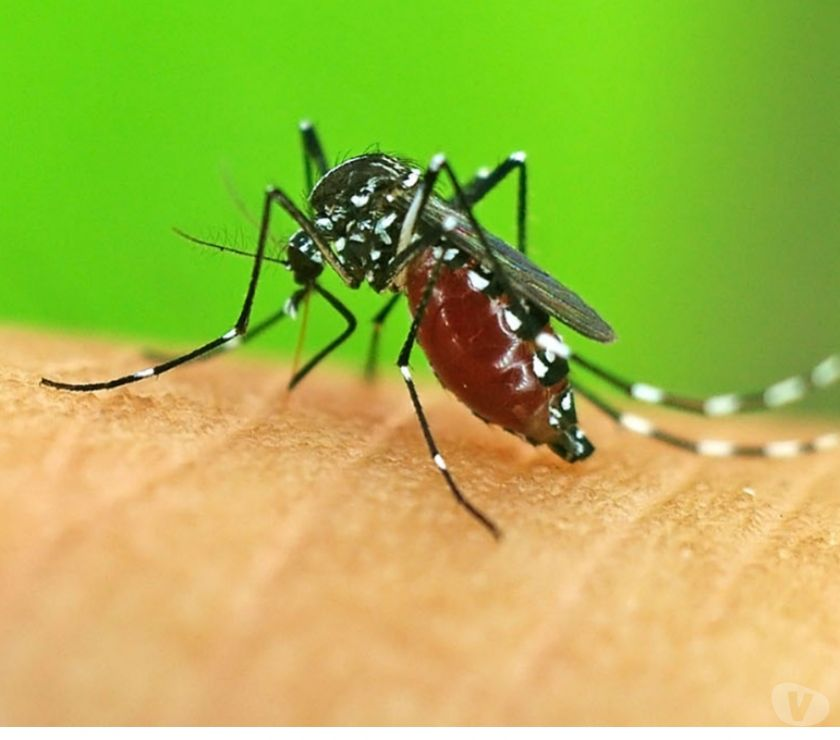 Other Services Chennai - Photos for Mosquito Control Services In Chennai
