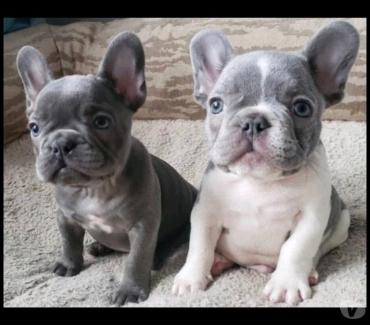 Fotos de 2 cachorros