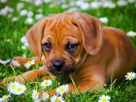 Fotos de Curso de Adiestramiento de Perros