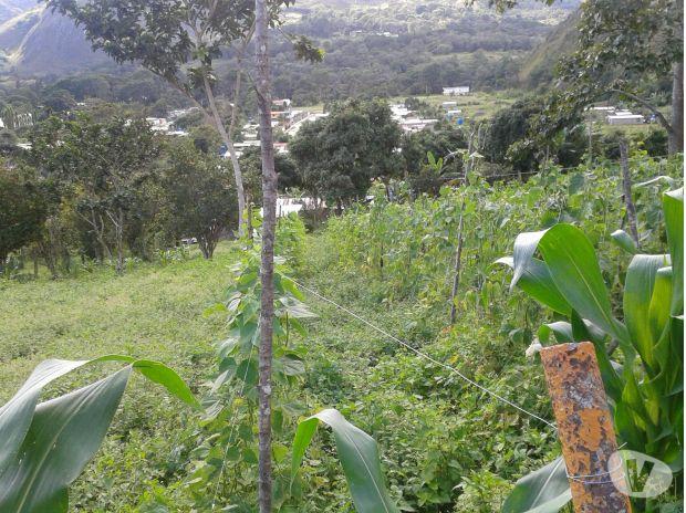 Fotos de Terrenos en Caripe